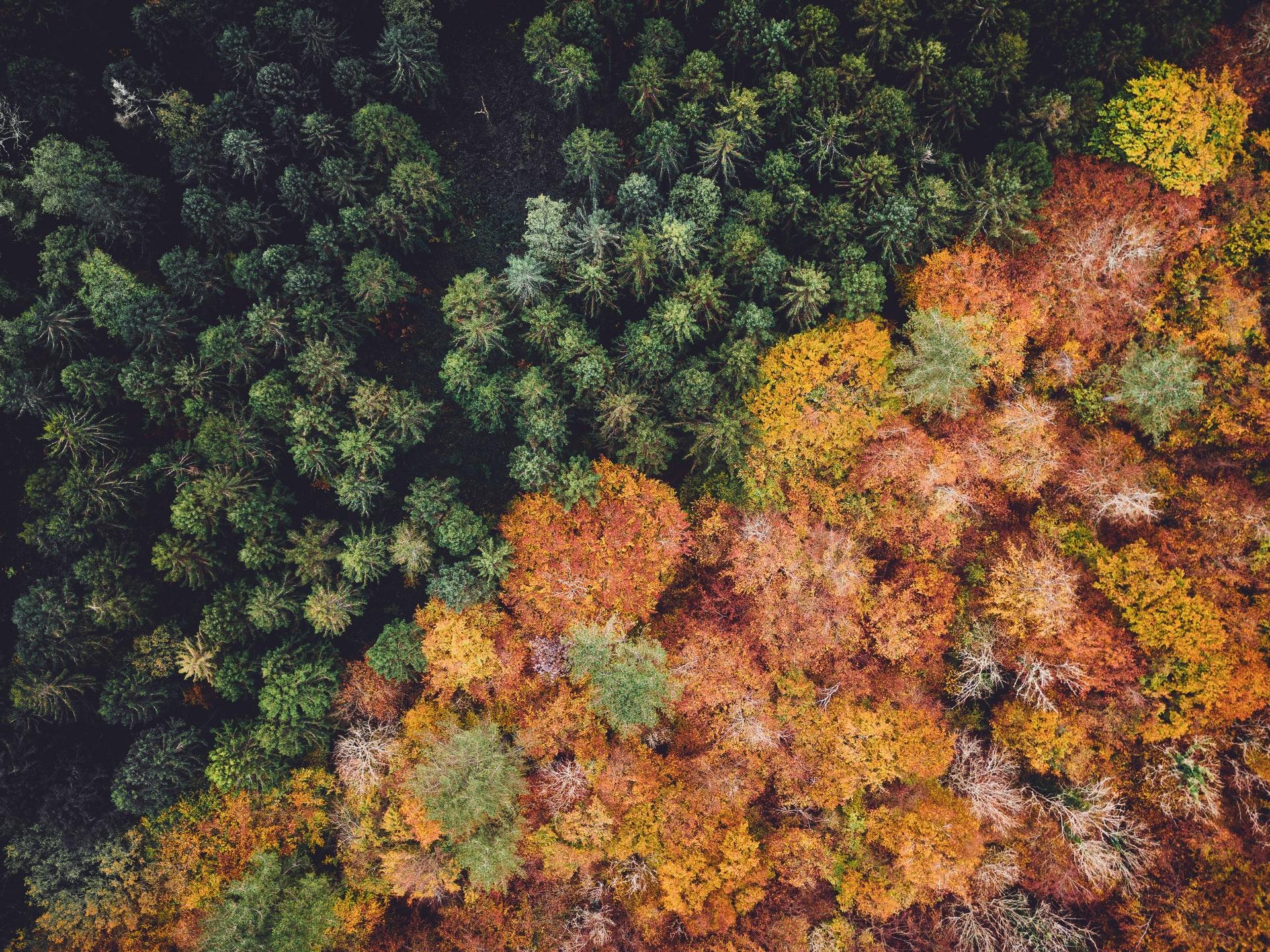Forêt verte et rouge